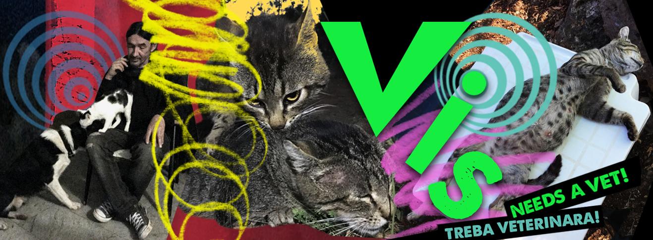 Vis needs a vet!