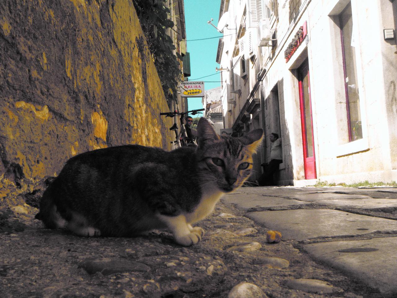 street cat, Vis, Croatia
